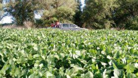 """Argentina: descendió el poder de compra de la soja por efecto de la """"doble retención"""""""