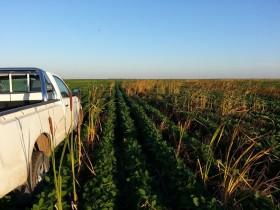 En el primer mes del año los patentamientos de camionetas agropecuarias crecieron un 85%
