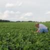 Arrendamientos agrícolas 2016: los empresarios que cerraron acuerdos con soja disponible pagarán sobrecostos importantes