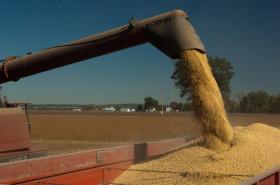 Hoy fue posible vender soja disponible a casi 2700 $/tonelada: pero para saber si es un valor conveniente es necesario evaluar precios relativos
