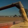 Se vienen varios días óptimos para avanzar con la cosecha gruesa en a región pampeana