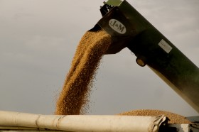 Esta semana el precio de la soja pizarra Rosario registró un descuento de hasta 26 $/tonelada luego de desaparecer durante cinco jornadas