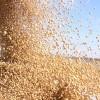 El peso se devaluó 3,6% en apenas un día: la soja pasó a ser el bien que mejor permite asegurar la reserva del valor del capital