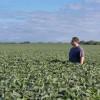 Peligro: con una suba de la alícuota al 33% el derecho de exportación efectivo sobre la soja trepa al 50%