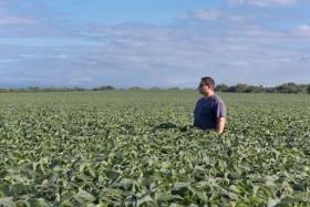 La certificación agrícola sigue siendo percibida como un lujo: no está en la agenda de la mayor parte de los productores