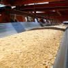Brasil: a sólo tres meses de la cosecha industrias aceiteras advierten que no recibirán soja Intacta si no llegan a un acuerdo con Monsanto