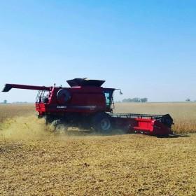Tabla de posiciones: el oeste bonaerense va liderando el ranking argentino de rendimientos de soja