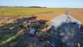 """Adreani: """"Si la soja no sube de precio se está incubando una de las peores crisis del sector agrícola"""""""