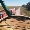 """Crecen los incentivos para diferir ventas de soja al último trimestre del año: se priorizará al maíz para hacer """"caja"""""""