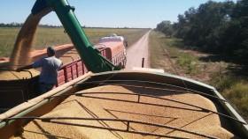 Hasta el viernes habrá tiempo ideal para avanzar con la cosecha en la zona pampeana: el sábado se vienen lluvias en el sector sur