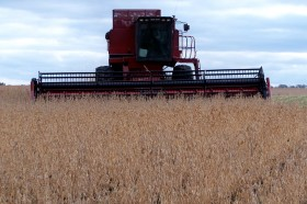 Regalo de EE.UU. con fecha de vencimiento: los precios de la soja son superiores a los presupuestados en plena cosecha sudamericana