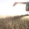No se prevén lluvias en la mayor parte de las zonas productivas: buena semana para avanzar con la cosecha gruesa