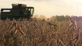 Argentina se encamina a una cosecha récord de soja: los rindes en zonas no tradicionales equiparan a los de la zona núcleo pampeana