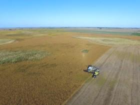 Se interrumpe la cosecha gruesa: esta semana regresan las lluvias