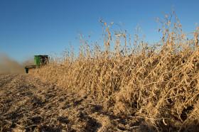 Hasta el viernes habrá tiempo ideal para avanzar con la cosecha en la mayor parte de las zonas productivas