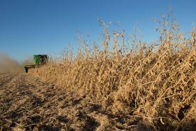 """Teléfono para Buryaile: dirigentes de CRA pidieron al gobierno que desactive la """"retención privada"""" de facto implementada por Monsanto"""