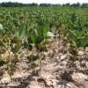 País federal: este año el gobierno nacional cobrará retenciones por 850 millones de pesos a productores de soja mayormente fundidos