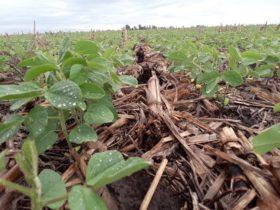 Salió la primera tanda de pagos de compensaciones para pequeños productores de soja con un desembolso de 6800 M/$