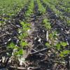 Argentina se hace adicta al yuyo: la participación de la soja en las exportaciones alcanzó un récord histórico