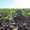 Discriminación: si los productores agrícolas recibieran el mismo tratamiento que los de petróleo podrían vender la soja nueva a 400 u$s/tonelada