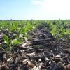 El Ministerio de Educación dio de baja del portal educ.ar contenidos con desinformación sobre el cultivo de soja
