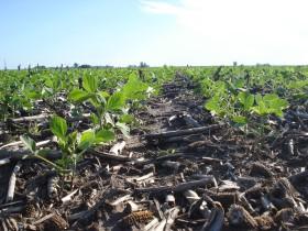 Comenzó a regir la reducción gradual de retenciones a la soja: un incentivo para que los productores difieran ventas