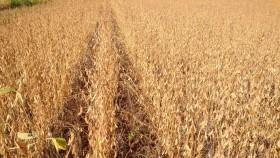 Dale las gracias a la soja: un 25% del presupuesto provincial de obra pública se financia con aportes directos de los productores agrícolas