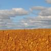 La demanda de granos no afloja: el mercado climático sudamericano introdujo ahora un nuevo factor alcista