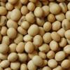 Para cambiar soja por tierra productiva los empresarios agrícolas tienen que pagar una retención del 60%