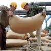 Industriales aceiteros chinos aseguran que están perdiendo dinero con la soja importada por un error de cálculo del USDA
