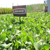 """Monsanto anunció que reduce la retención privada en soja Intacta al 4% para que los productores puedan """"pagar la tecnología de manera simple y amigable"""""""