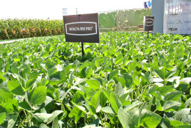 Alerta biológica: más del 70% de las variedades de soja inscriptas en 2017 tienen el evento Intacta de Monsanto