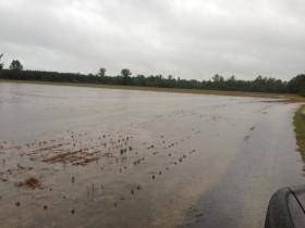 La semana que viene regresan las lluvias al Medio Oeste de EE.UU: factor alcista para la soja