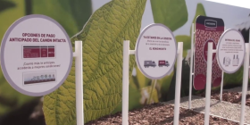 En la zona núcleo pampeana el rinde promedio de la soja Intacta fue inferior al de los cultivares RR1