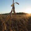 Orgullo argentino: un mercado de futuros agrícolas que permite reflejar la fortaleza del Mercosur en el nuevo escenario internacional