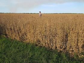 Productores del norte que hayan vendido soja en abril podrán cobrar una compensación de 268 $/tonelada: permite cubrir el 30% del flete desde Charata a Rosario