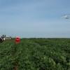 Primera semana de vigencia del régimen de importación de soja: no ingresó un solo poroto desde Paraguay