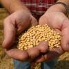 Doble desmantelamiento: los ingresos generados por la exportación de soja no alcanzan para cubrir el déficit energético argentino