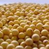 Rumores y amenazas por medios oficialistas: dos métodos que no funcionan para generar ventas de soja