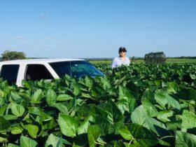 Lección aprendida: la mayor parte de los empresarios agrícolas argentinos lograron realizar una comercialización profesional de la soja 2019/20