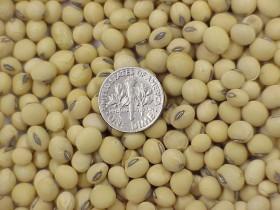"""La reforma de la ley de semillas no contempla los eventos biotecnológicos: piden establecer el pago de un solo """"canon tecnológico"""""""