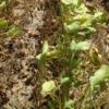 Poco oportuno: Argentina pierde 2,50 millones de toneladas de soja por restricciones hídricas