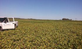Desastre agropecuario: otra semana sin perspectivas de lluvias importantes en las zonas pampeanas necesitadas de agua