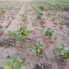 El norte también existe: la agricultura sigue siendo inviable en las zonas extra-pampeanas