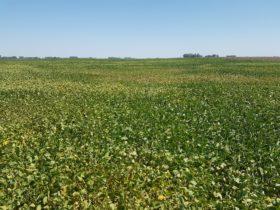 Semana complicada para los cultivos con altas temperaturas y sin perspectivas de precipitaciones
