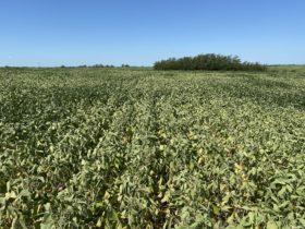 El peor momento para aumentar derechos de exportación: la mitad de la superficie de soja argentina está en problemas por falta de agua