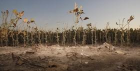 Se acabó el primer tiempo del partido de la soja 2012/13: pocos productores lo aprovecharon