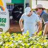 El negocio de la exportación de cultivares de soja argentinos cerrará 2015 con una caída de ventas superior al 30%