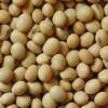 Cambio estructural en el negocio agrícola en campo alquilado: la mayor parte de los acuerdos se negocian con el precio de la soja nueva