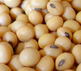 El Inase prorrogó hasta el 30 de marzo la obligación de declarar semillas de trigo y soja reservadas para uso propio
